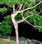 arbre homme manager