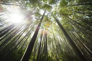lever soleil bambou meditation